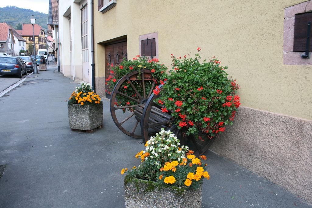 20121028_Dambach_010