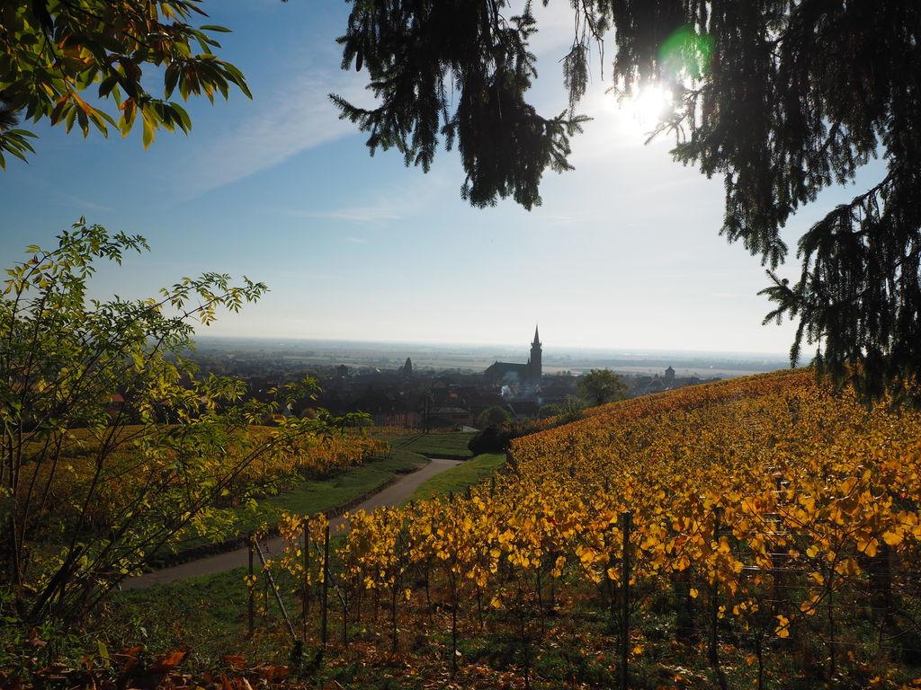 20161103_Dambach-la-Ville_und_Ottrott_002
