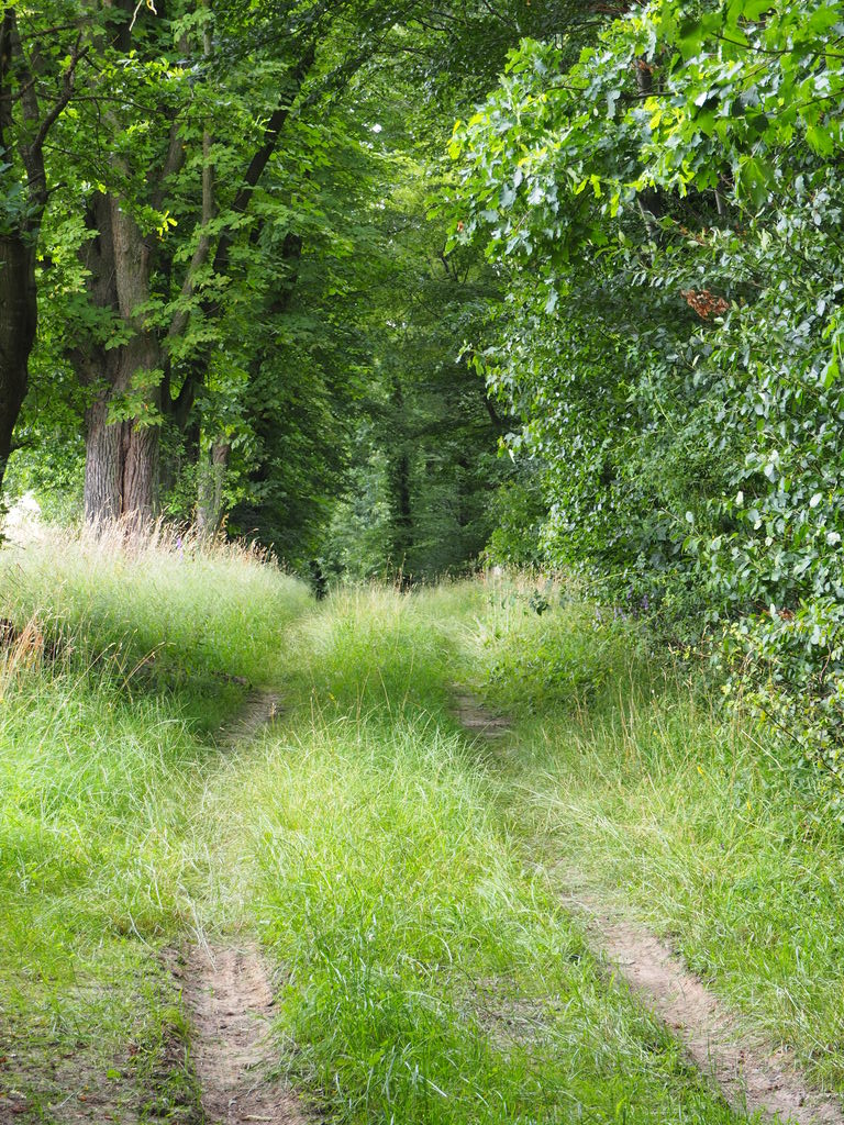 20160717_Spaziergang_in_der_Naehe_013