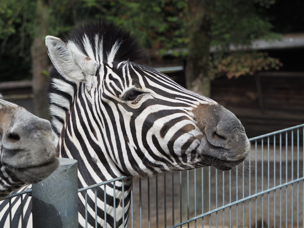 20160821_Tierpark_Bretten_026