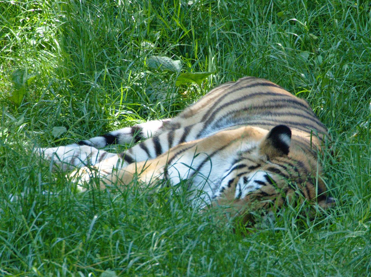 20190613_Zoo_Landau_001