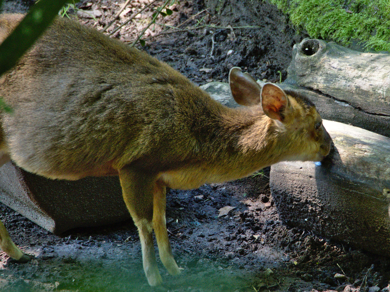 20190613_Zoo_Landau_002