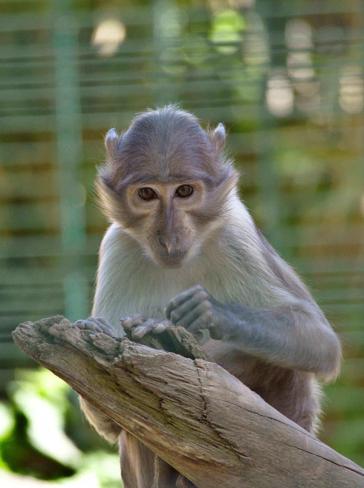 20190613_Zoo_Landau_011