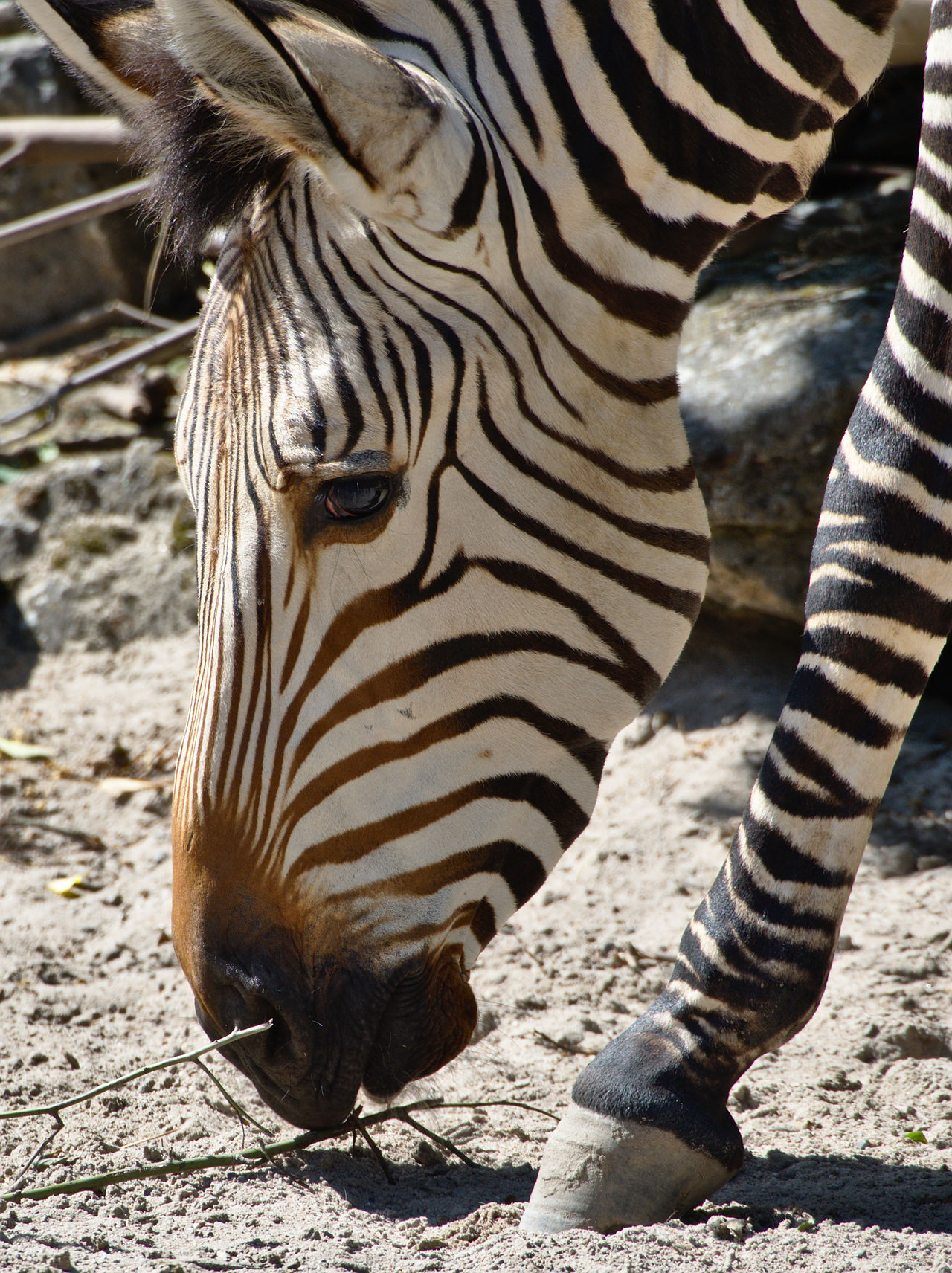 20190613_Zoo_Landau_034