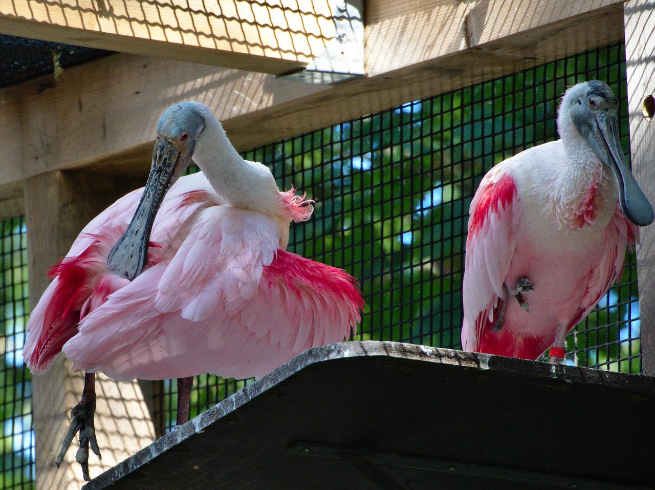 20190613_Zoo_Landau_074