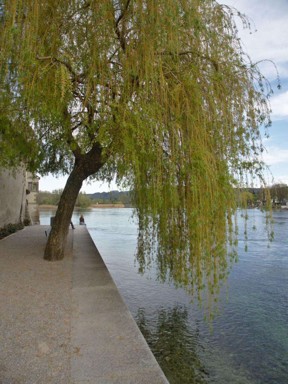 20190421_Stein_am_Rhein_026
