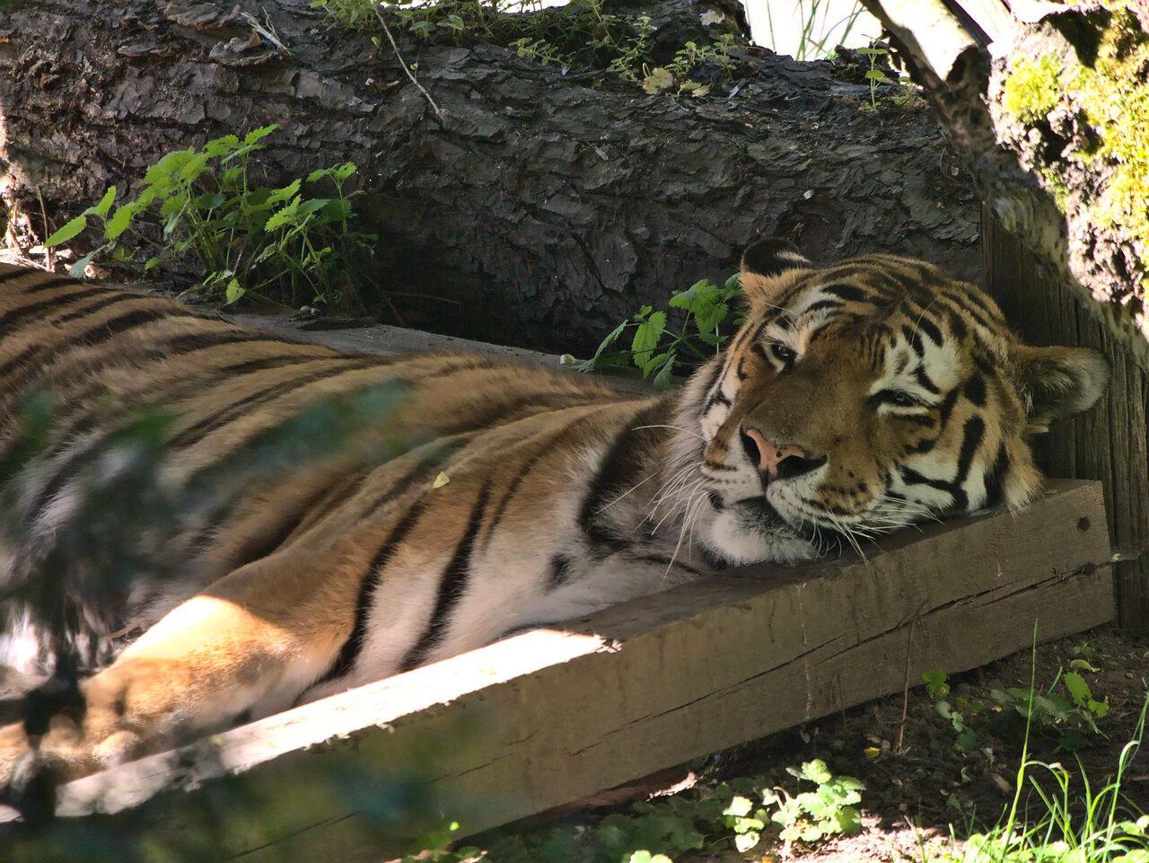20200524_Zoo_Landau_002
