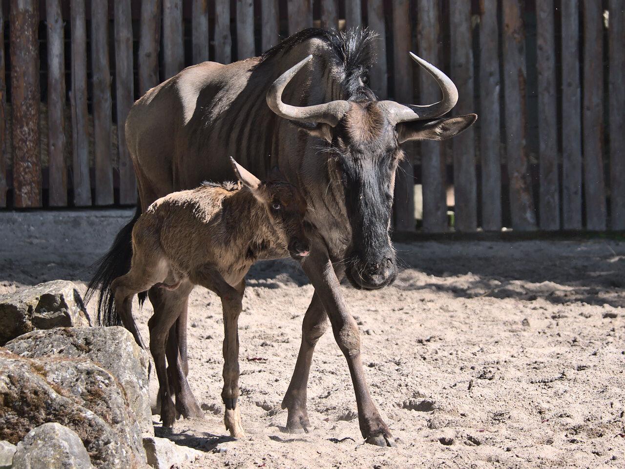 20200524_Zoo_Landau_014