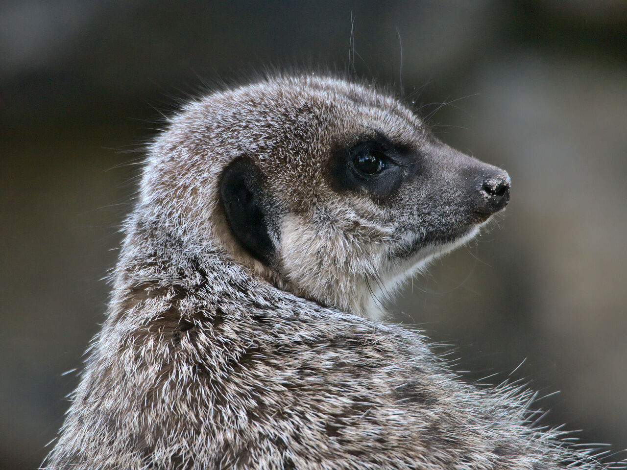 20200524_Zoo_Landau_017