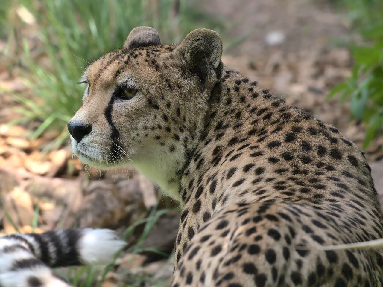 20200524_Zoo_Landau_034