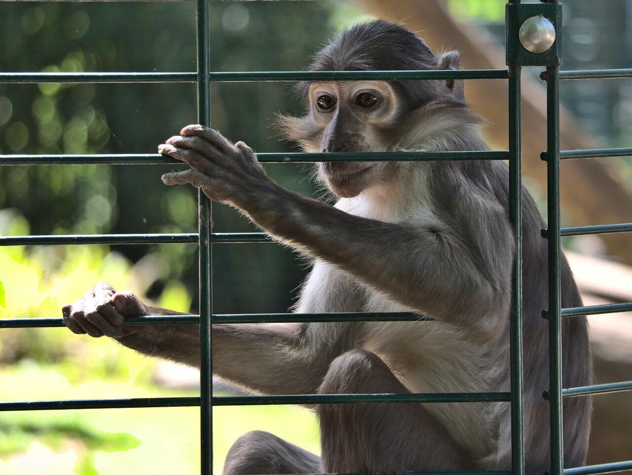 20200524_Zoo_Landau_038