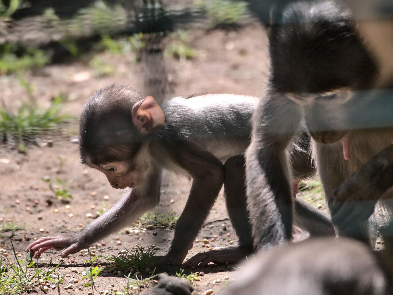 20200524_Zoo_Landau_062