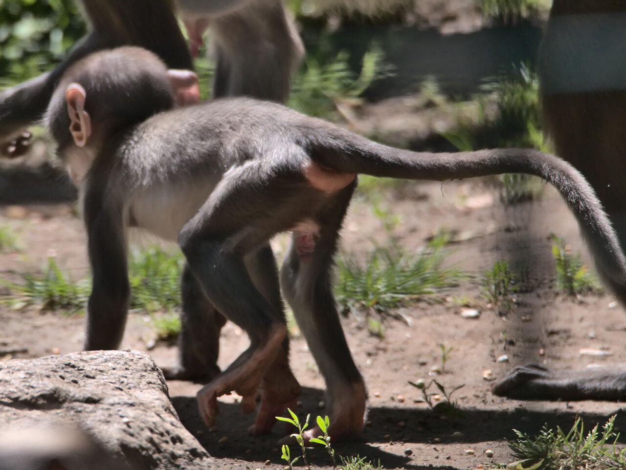 20200524_Zoo_Landau_064