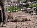 20200524_Zoo_Landau_042