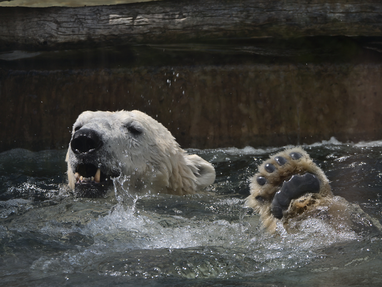 20200601_Zoo_Karlsruhe_016