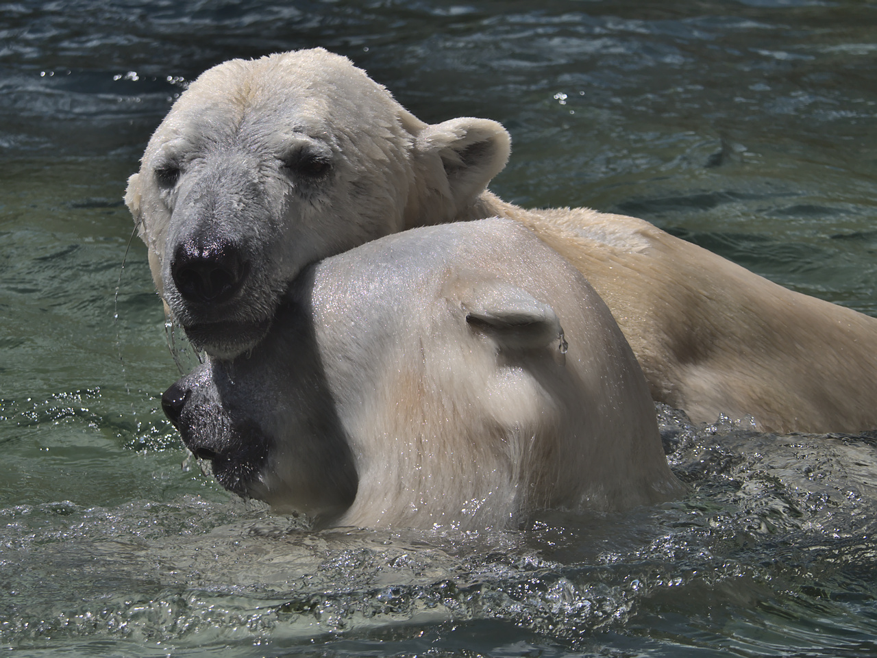 20200601_Zoo_Karlsruhe_018