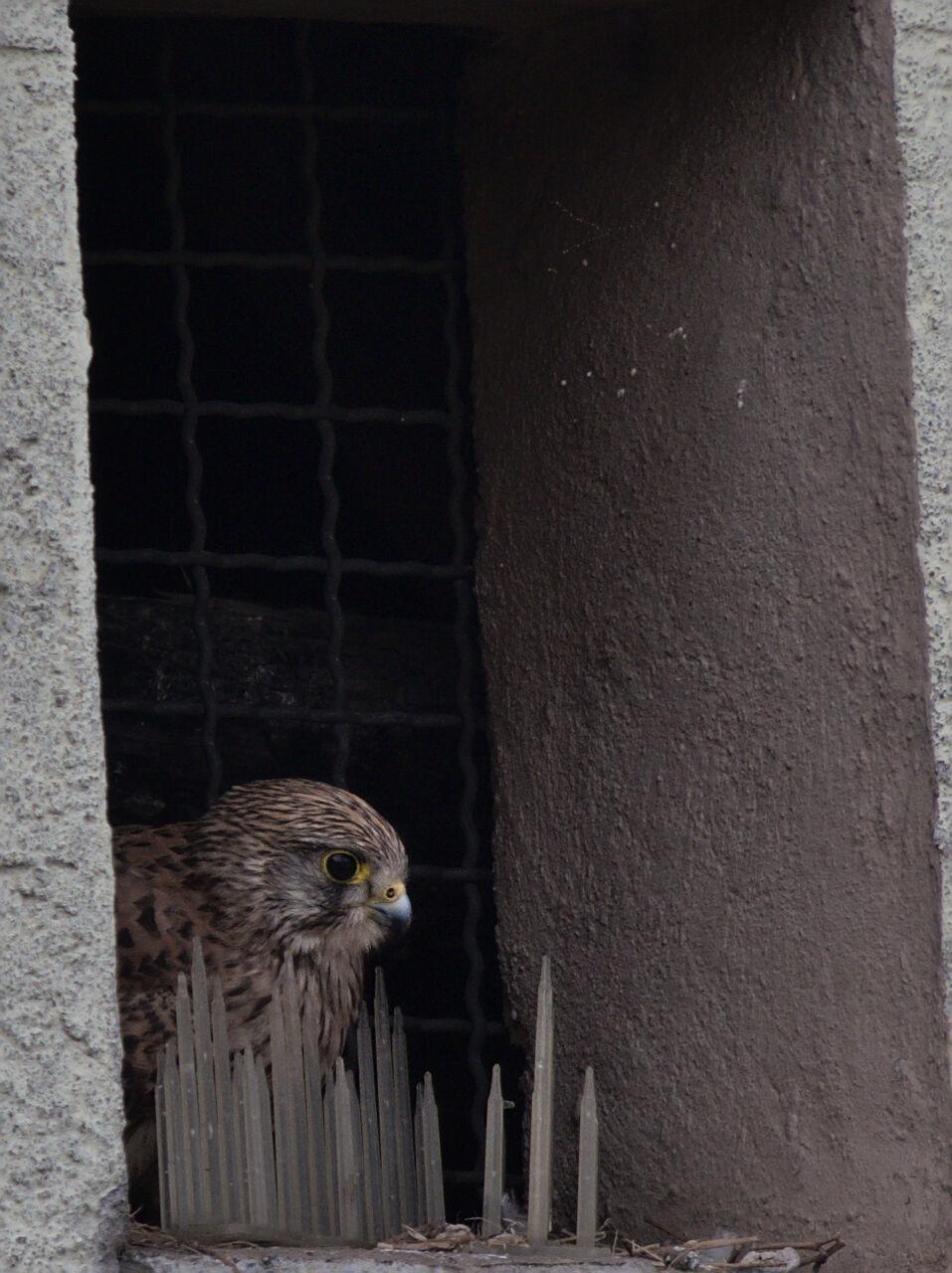 20200509_Vogelwelt_Sinsheim_002